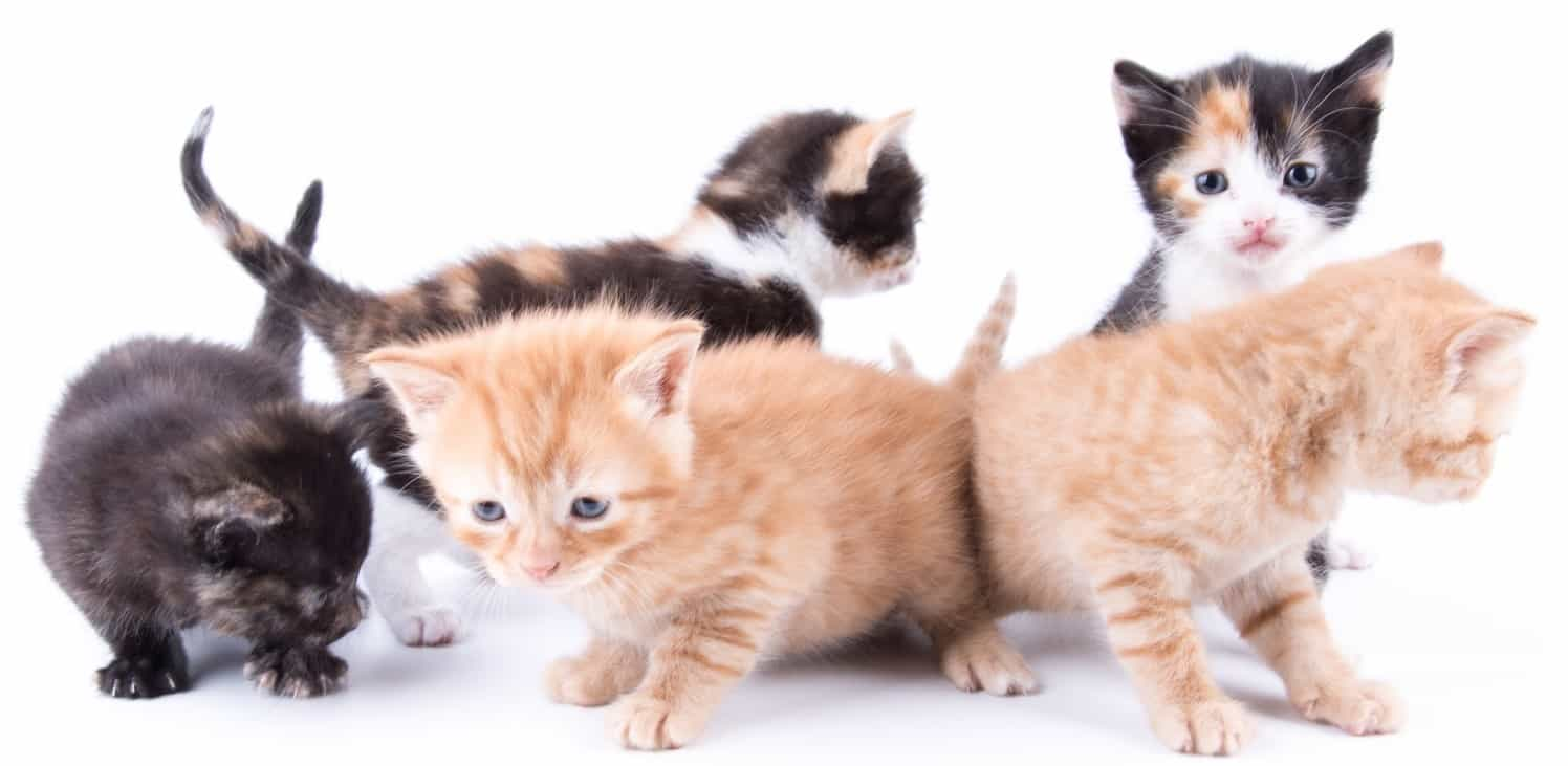 2nd Chance Cat Rescue – Cat Adoption Melbourne