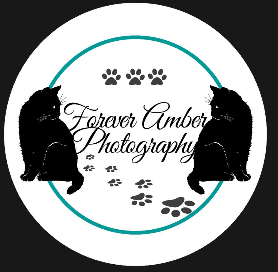 Amber-Photographer-logo-gif